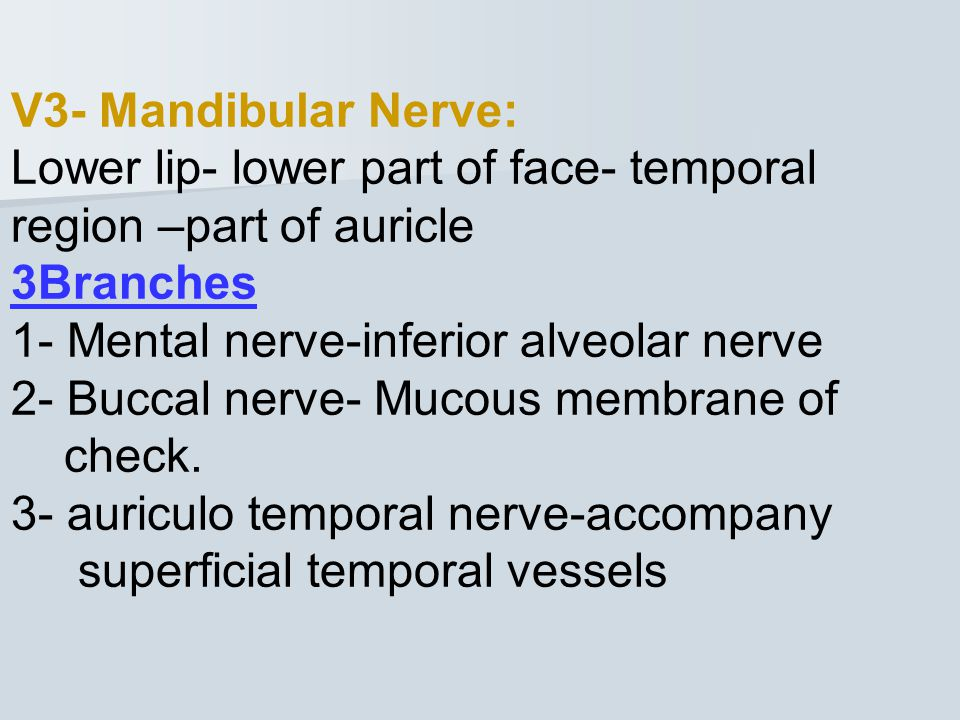 V3- Mandibular Nerve: Lower lip- lower part of face- temporal region –part of auricle. 3Branches. 1- Mental nerve-inferior alveolar nerve.