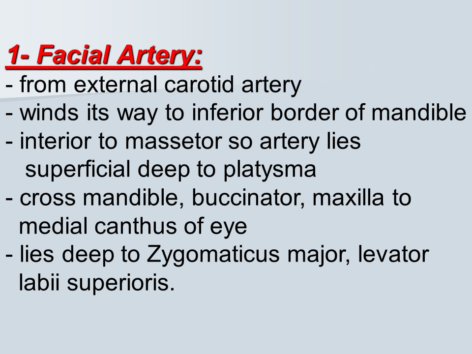 1- Facial Artery: - from external carotid artery