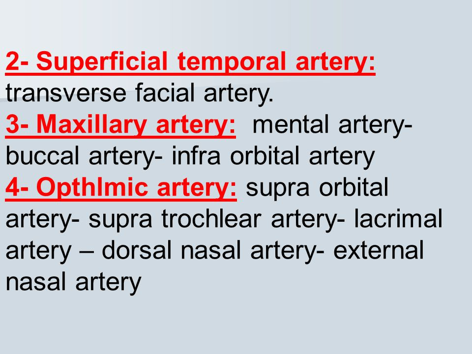 2- Superficial temporal artery: transverse facial artery.