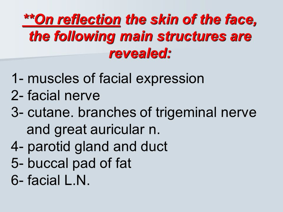 **On reflection the skin of the face, the following main structures are revealed: