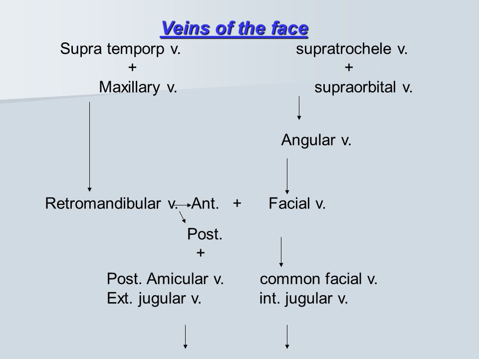 Veins of the face Supra temporp v. supratrochele v. + +