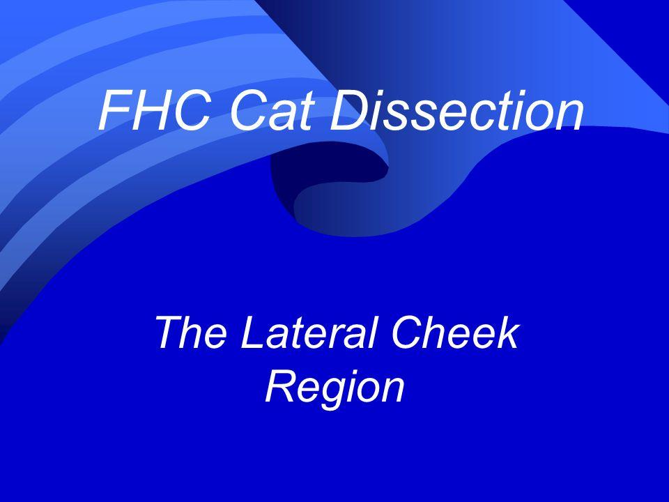 The Lateral Cheek Region