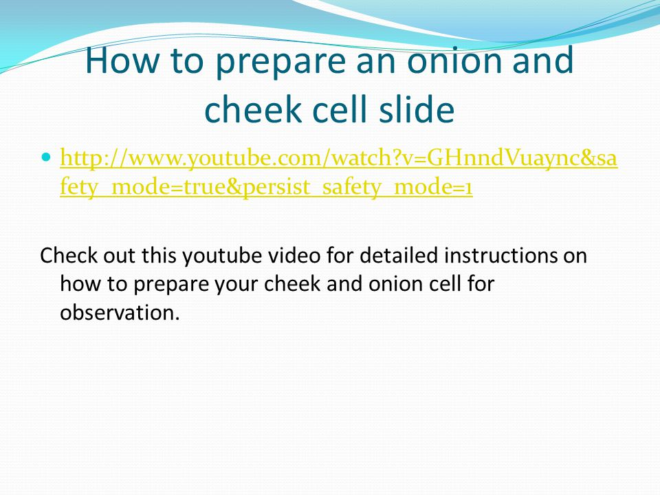 How to prepare an onion and cheek cell slide