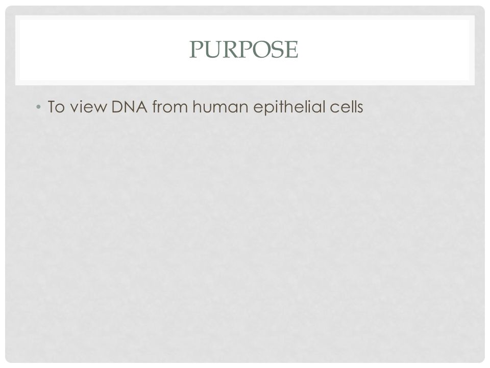 Purpose To view DNA from human epithelial cells