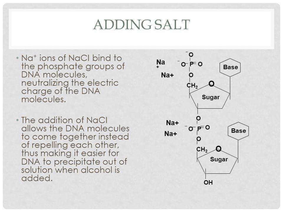 Adding Salt Na+ O. CH2. P. Base. OH. Sugar.