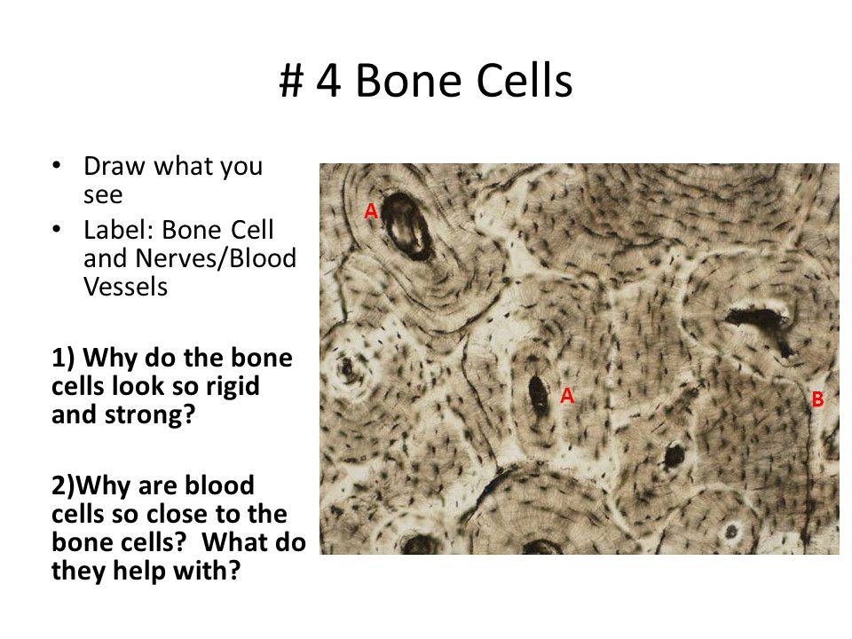 # 4 Bone Cells Draw what you see