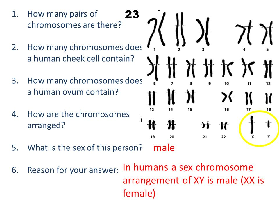 in homologous pairs. 23 pairs male
