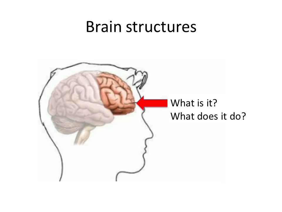 Brain structures What is it What does it do