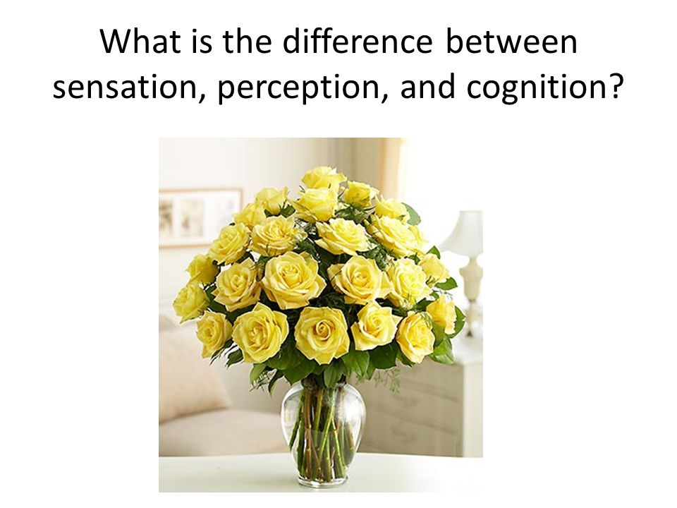 What is the difference between sensation, perception, and cognition