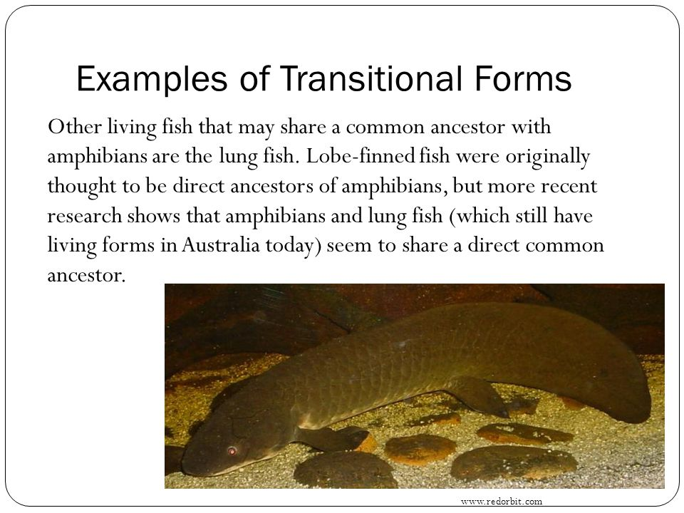 Examples of Transitional Forms
