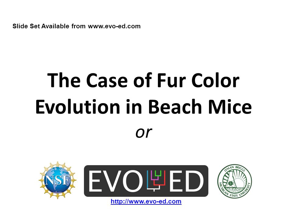 The Case of Fur Color Evolution in Beach Mice or