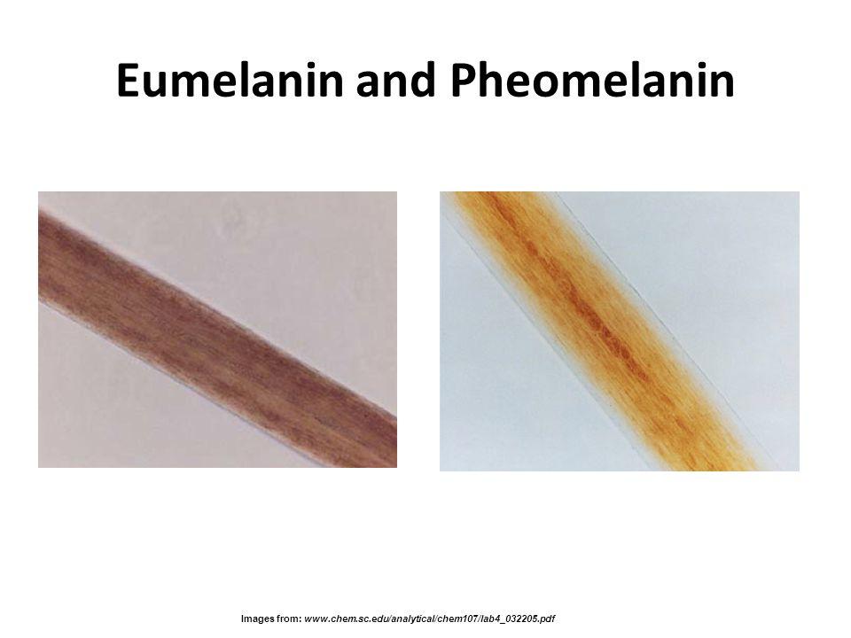 Eumelanin and Pheomelanin