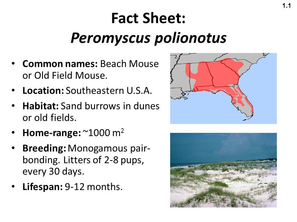 Fact Sheet: Peromyscus polionotus