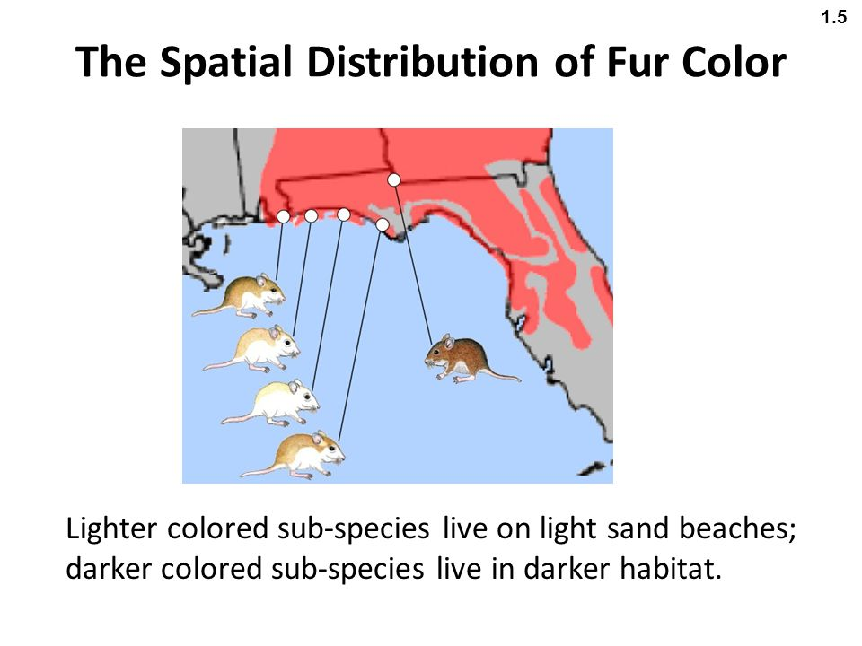 The Spatial Distribution of Fur Color