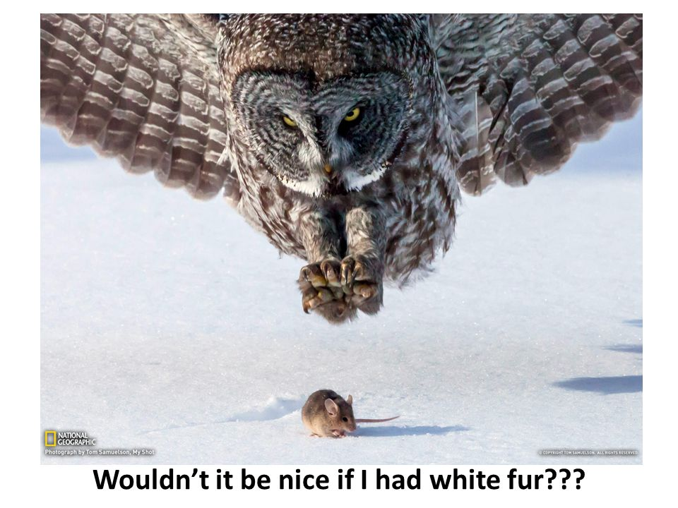 Wouldn't it be nice if I had white fur