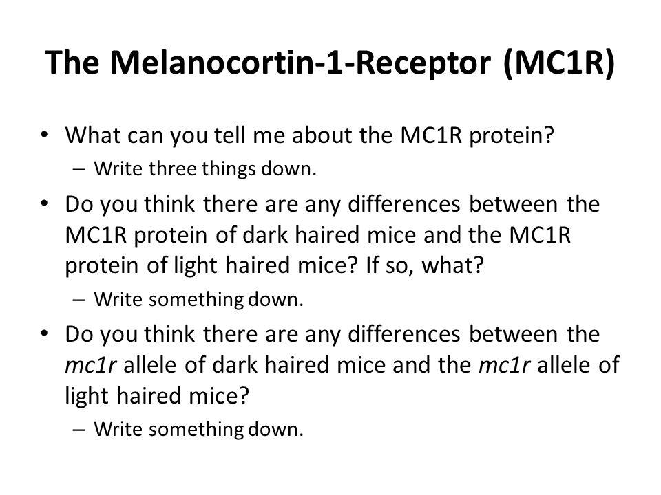 The Melanocortin-1-Receptor (MC1R)