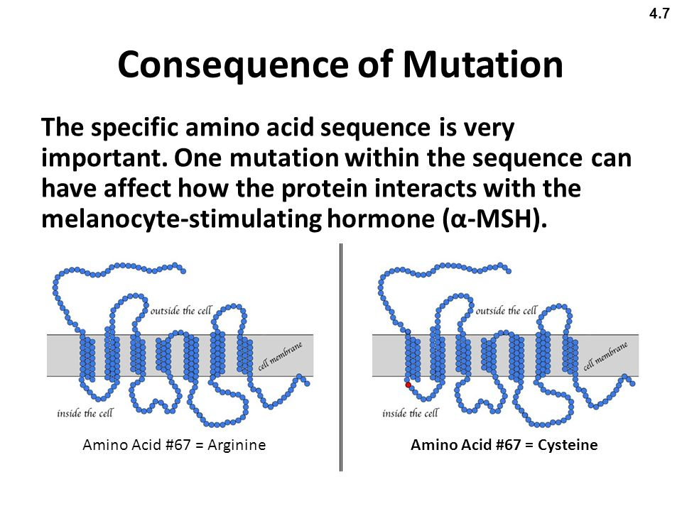 Consequence of Mutation