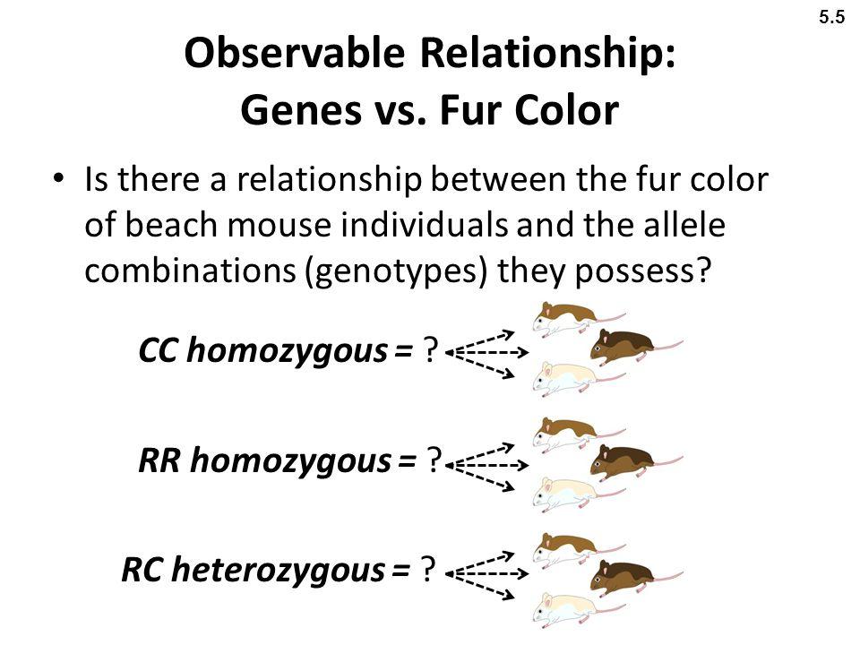 Observable Relationship: Genes vs. Fur Color