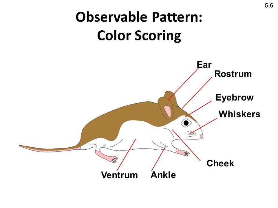 Observable Pattern: Color Scoring