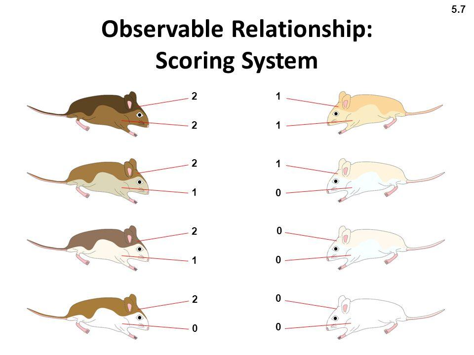 Observable Relationship: Scoring System