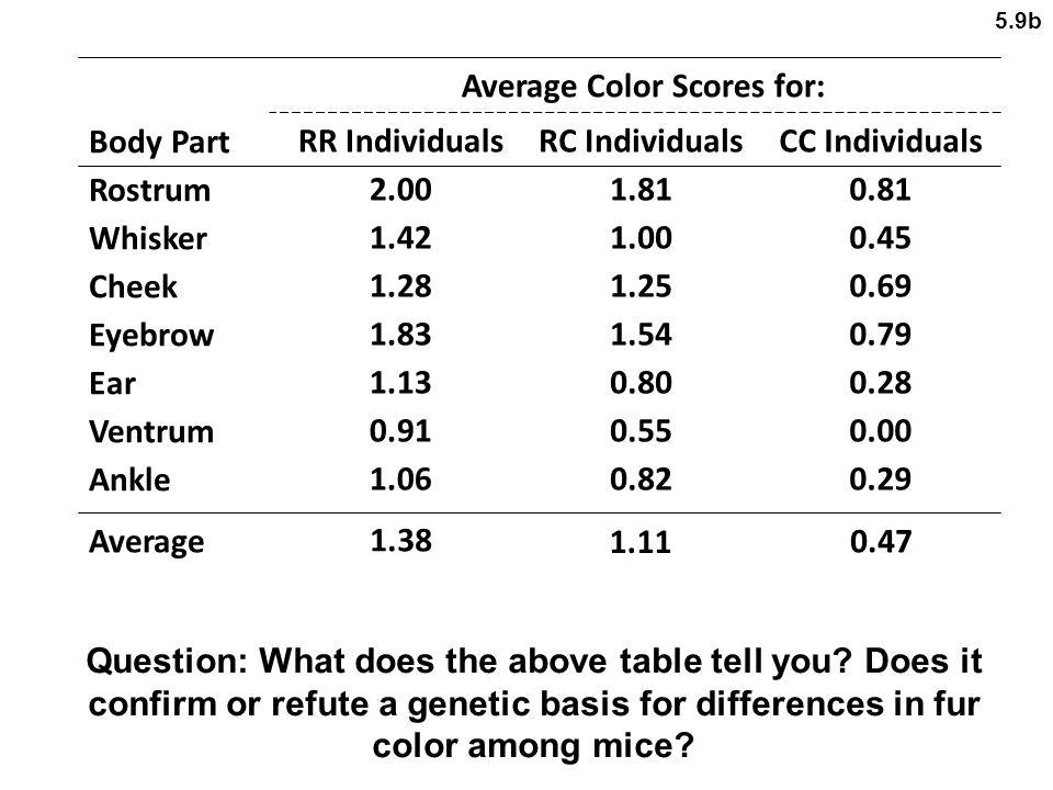 Average Color Scores for: