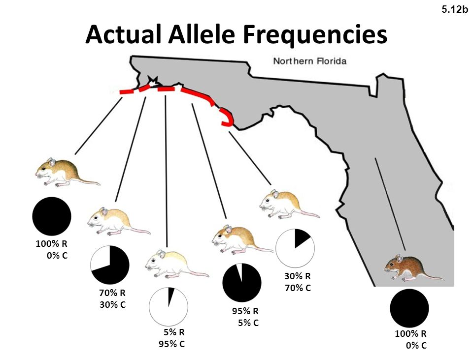 Actual Allele Frequencies