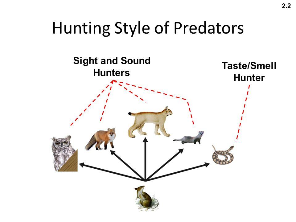 Hunting Style of Predators