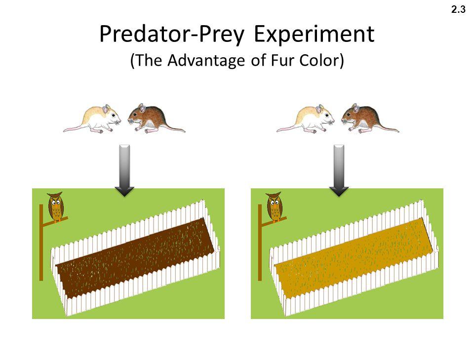 Predator-Prey Experiment (The Advantage of Fur Color)