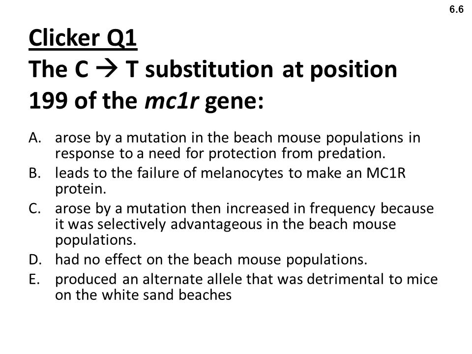 Clicker Q1 The C  T substitution at position 199 of the mc1r gene: