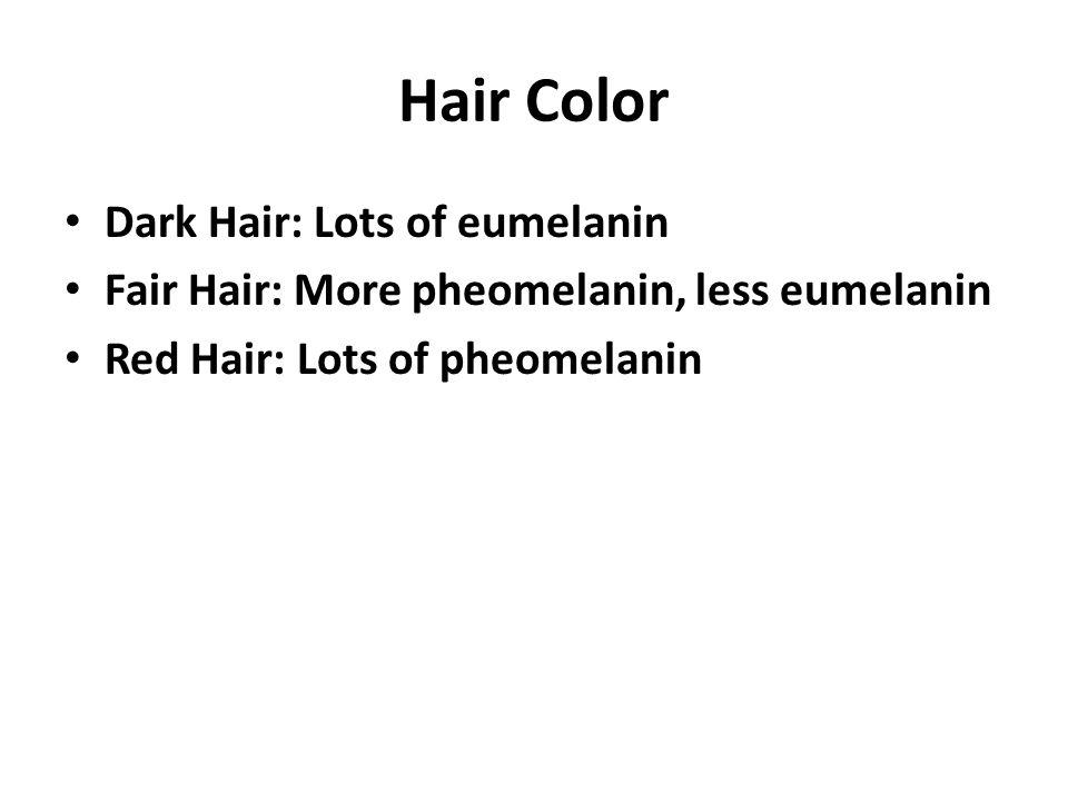 Hair Color Dark Hair: Lots of eumelanin