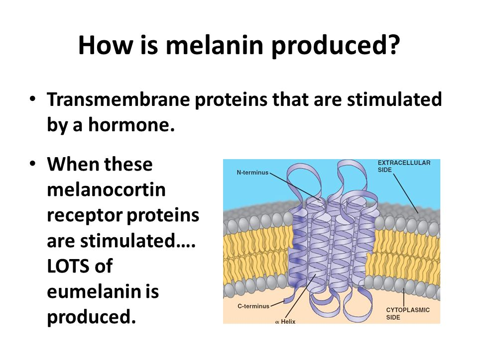 How is melanin produced