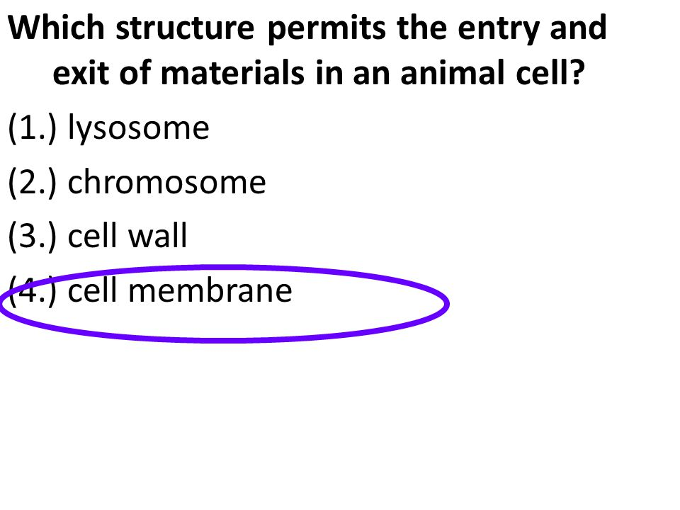 Which structure permits the entry and exit of materials in an animal cell