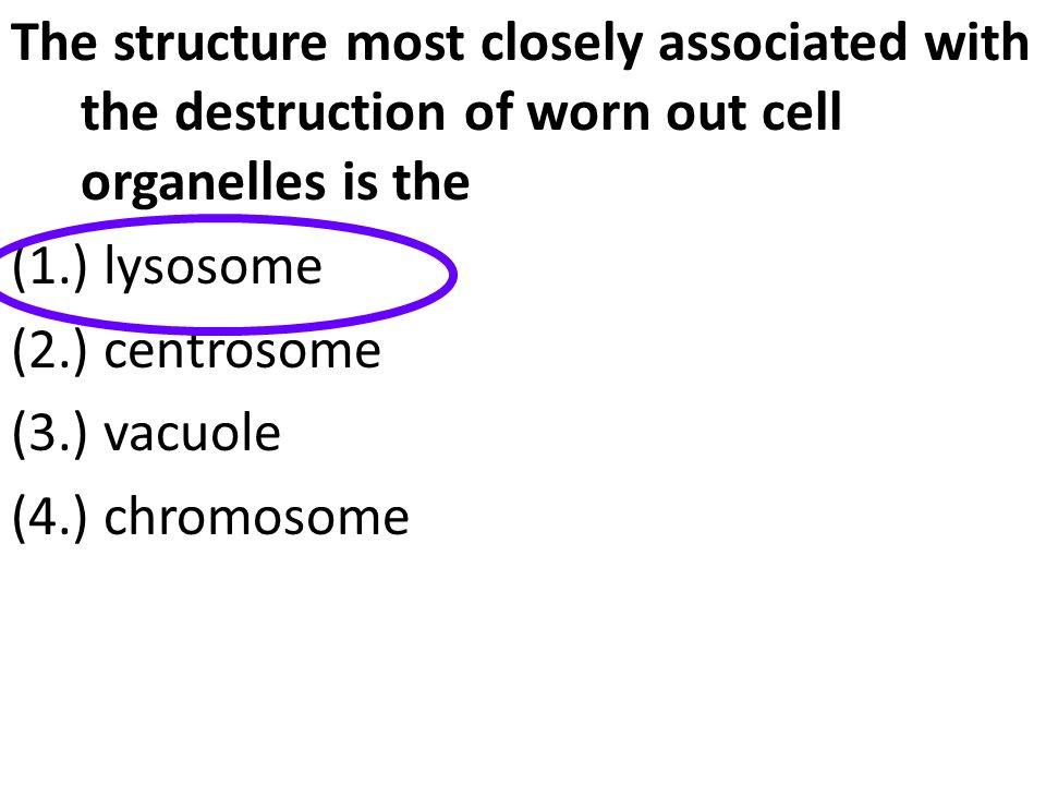 The structure most closely associated with the destruction of worn out cell organelles is the