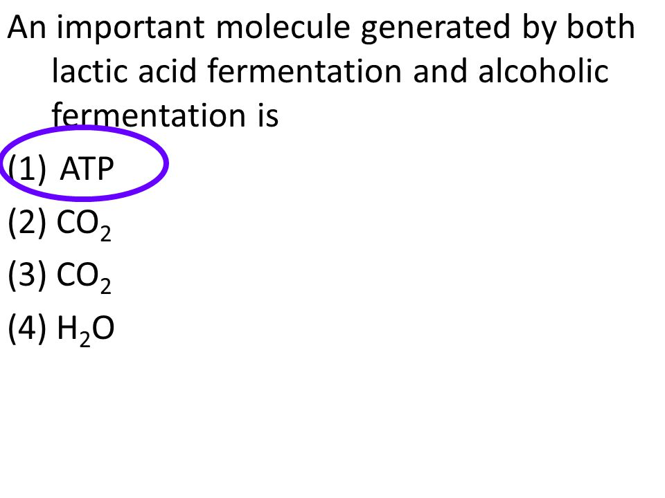 An important molecule generated by both lactic acid fermentation and alcoholic fermentation is