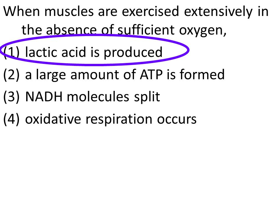 When muscles are exercised extensively in the absence of sufficient oxygen,