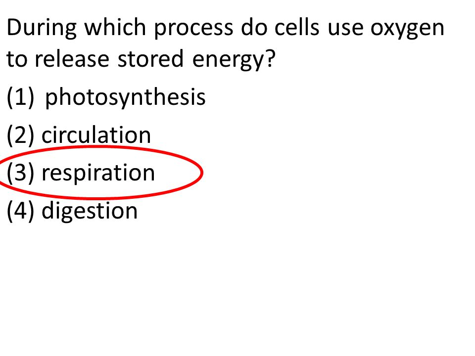 During which process do cells use oxygen to release stored energy