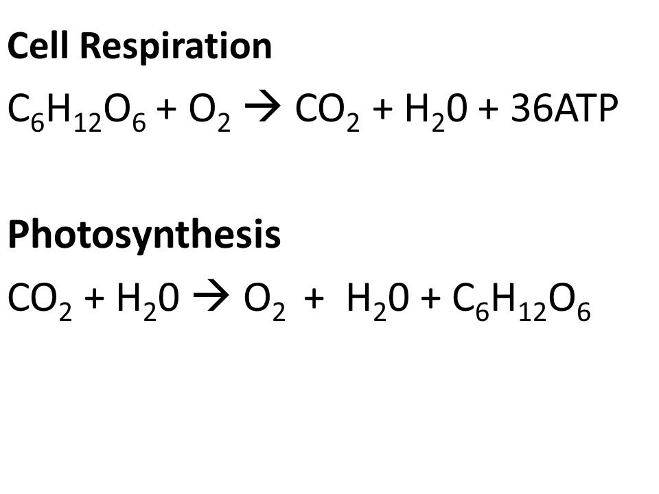 C6H12O6 + O2  CO2 + H20 + 36ATP Photosynthesis