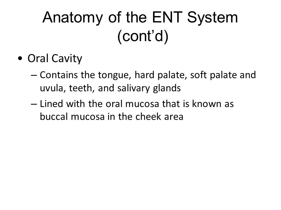 Anatomy of the ENT System (cont'd)