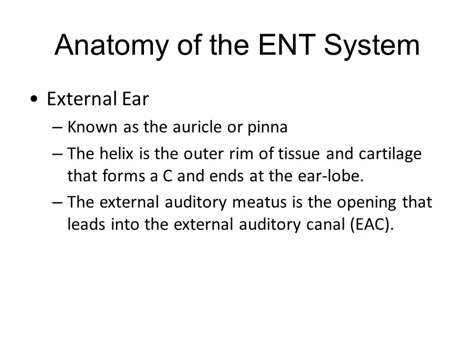 Anatomy of the ENT System