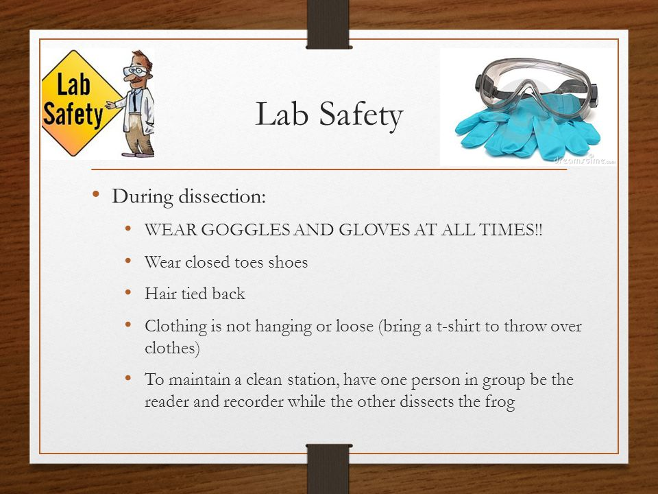 Lab Safety During dissection: WEAR GOGGLES AND GLOVES AT ALL TIMES!!