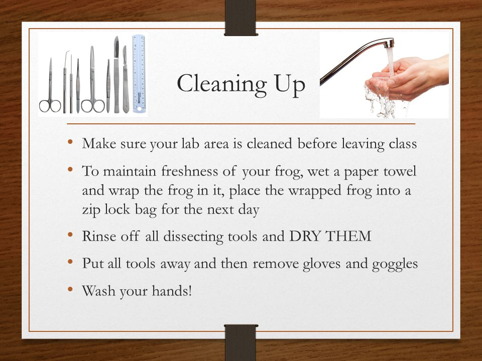 Cleaning Up Make sure your lab area is cleaned before leaving class