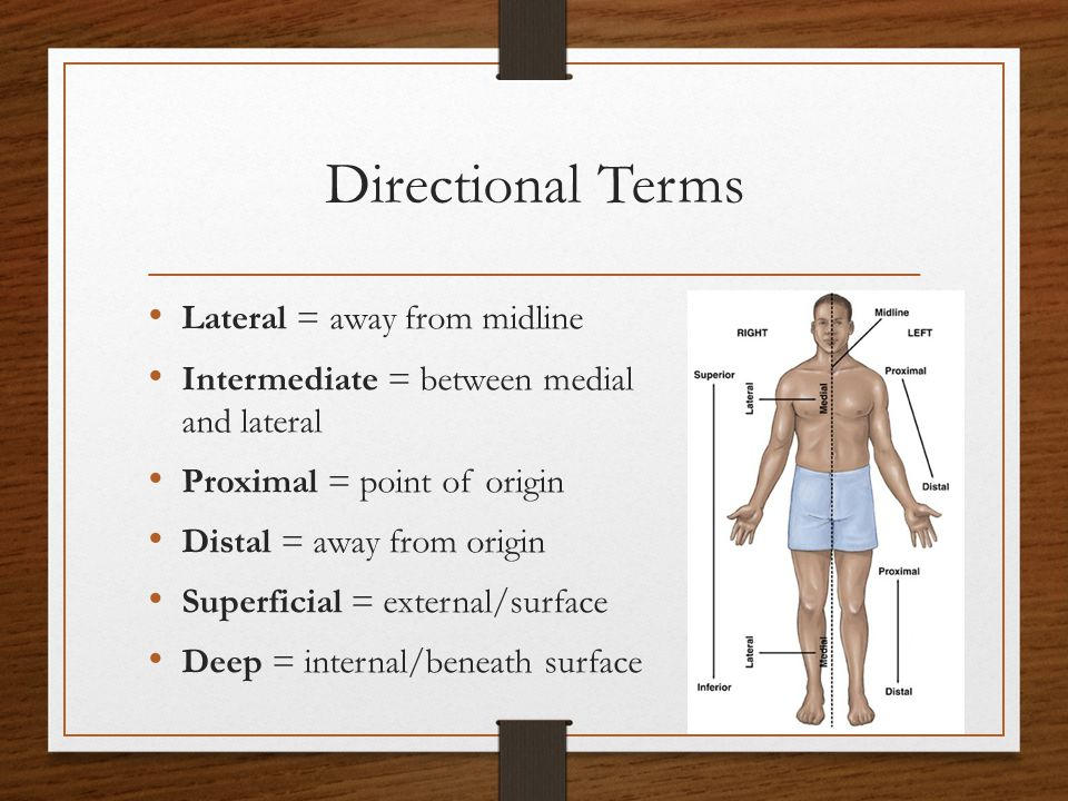 Directional Terms Lateral = away from midline