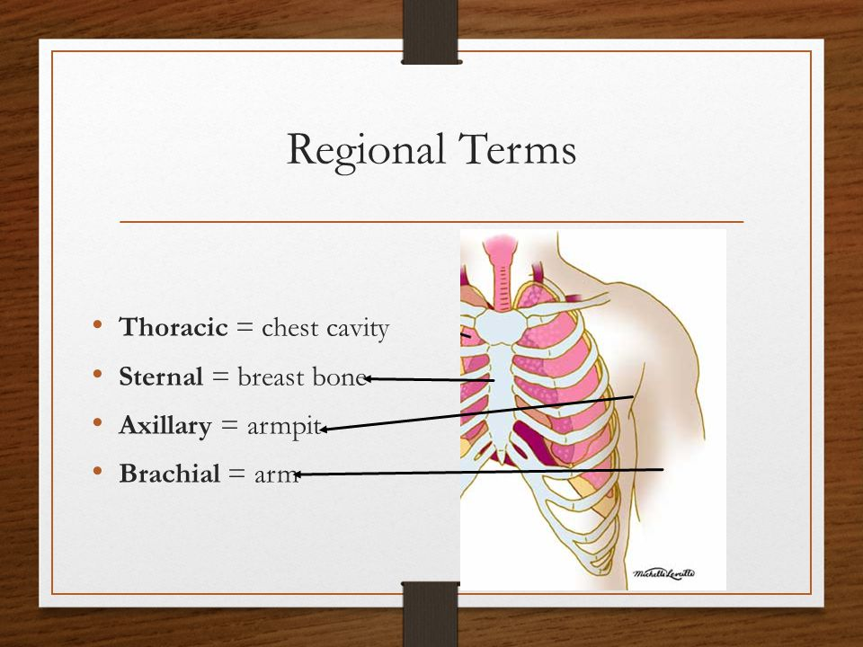 Regional Terms Thoracic = chest cavity Sternal = breast bone