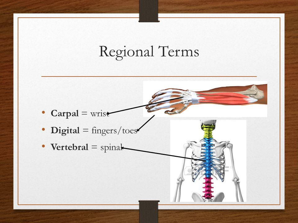 Regional Terms Carpal = wrist Digital = fingers/toes