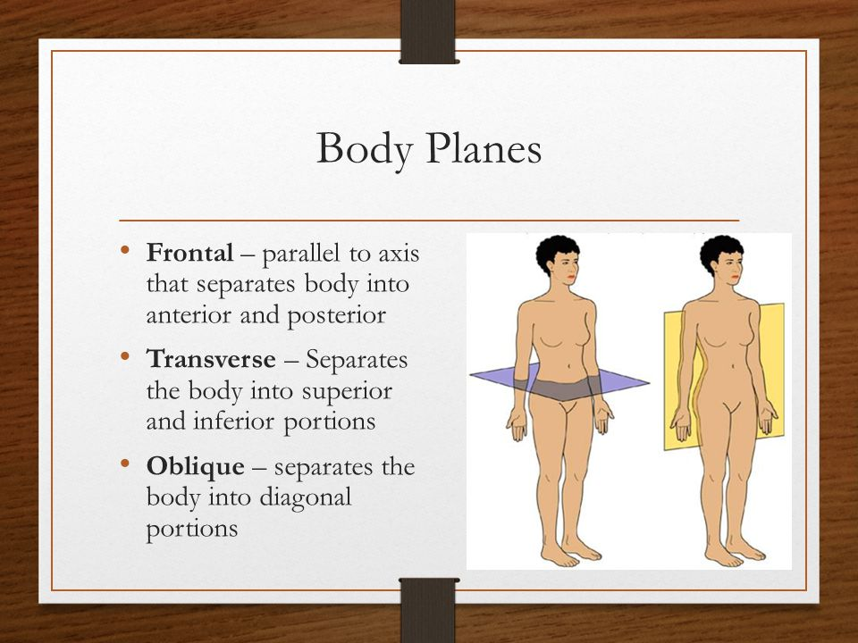 Body Planes Frontal – parallel to axis that separates body into anterior and posterior.