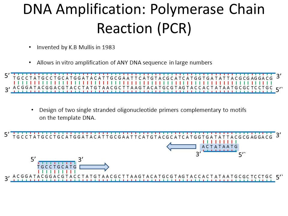 DNA Amplification: Polymerase Chain Reaction (PCR)