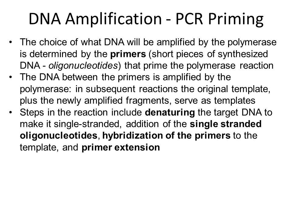 DNA Amplification - PCR Priming
