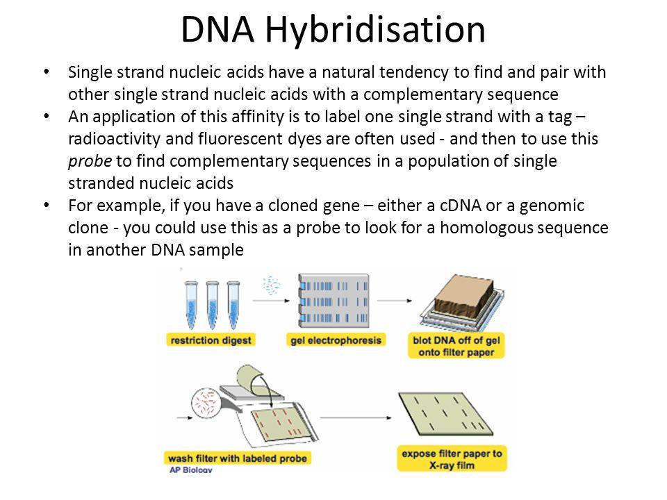 DNA Hybridisation