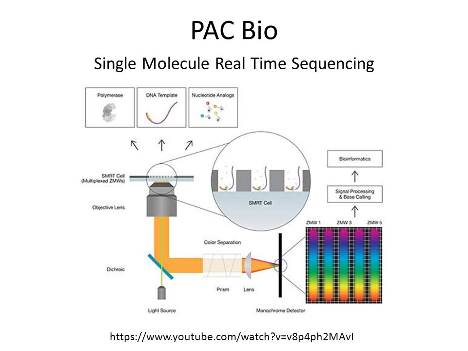 Single Molecule Real Time Sequencing