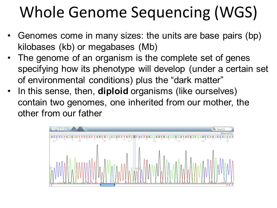Whole Genome Sequencing (WGS)